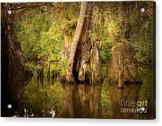 Cypress  Acrylic Print by Scott Pellegrin