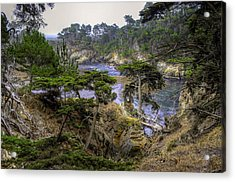 Cypress Acrylic Print by Stephen Campbell