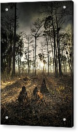 Cypress Stumps And Sunset Fire Acrylic Print