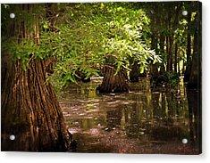 Cypress Swamp Acrylic Print by Marty Koch