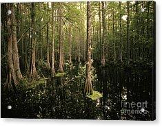 Cypress Swamp Acrylic Print by Ron Sanford