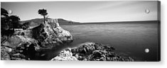Cypress Tree At The Coast, The Lone Acrylic Print by Panoramic Images