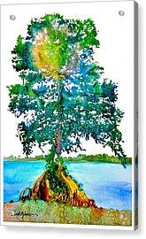 Da107 Cypress Tree Daniel Adams Acrylic Print