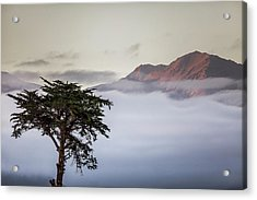 Cypress Tree In Foreground With Clouds Acrylic Print