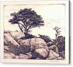 Cypress Tree Acrylic Print