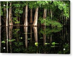 Cypress Trees In Suwanee River Acrylic Print