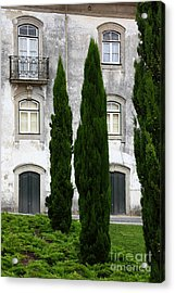Cypress Trees Acrylic Print by James Brunker