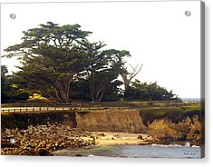 Cypress Trees On 17 Mile Drive Acrylic Print