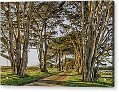 Cypress Tunnel Acrylic Print by Robert Rus