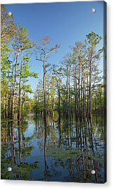 Cypress-tupelo Forest Acrylic Print