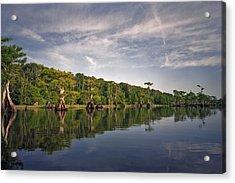 Cypress Wall. Blue Cypress Lake. Acrylic Print