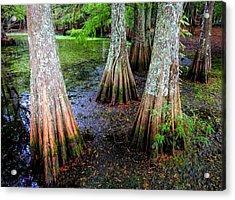 Cypress Waltz Acrylic Print by Karen Wiles