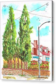 Cypresses In Massachusett Ave - Westwood - California Acrylic Print by Carlos G Groppa