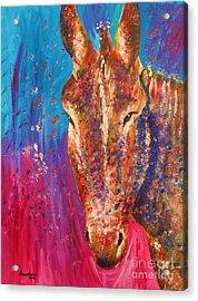 Cyprus Donkey Acrylic Print by Anastasis  Anastasi