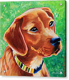 Dachshund Beagle Mixed Breed Dog Portrait Acrylic Print