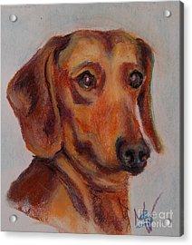 Dachshund Acrylic Print by Mindy Sue Werth