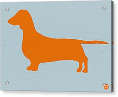 Dachshund Orange Acrylic Print by Naxart Studio