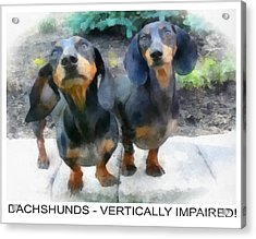 Dachshund Poster Acrylic Print by Betsy Cotton