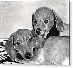 Dachshund Puppies Dog Portrait  Acrylic Print by Olde Time  Mercantile