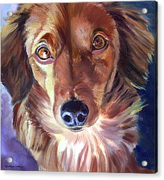 Dachshund Sparkle Eyes Acrylic Print by Lyn Cook