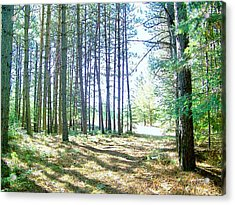 Dad's Woods I Acrylic Print by Shirley Moravec