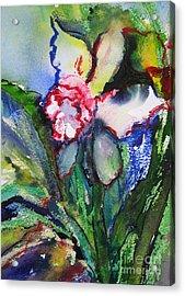 Daffodil 6 Acrylic Print by Gwen Nichols