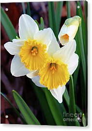 Daffodil Art  Acrylic Print by Andee Design