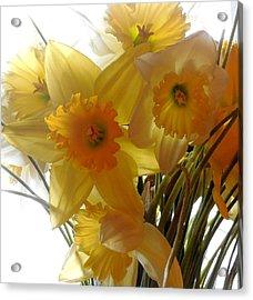 Daffodil Bouquet Acrylic Print