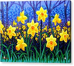 Daffodil Dance Acrylic Print by John  Nolan