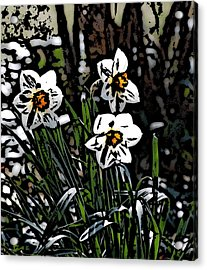 Acrylic Print featuring the digital art Daffodil by David Lane