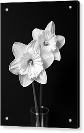 Daffodil Flowers Black And White Acrylic Print