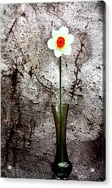 Acrylic Print featuring the photograph Daffodil by Gray  Artus