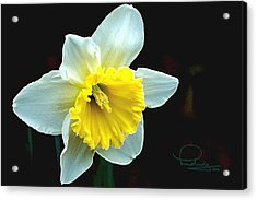 Acrylic Print featuring the photograph Daffodil by Ludwig Keck