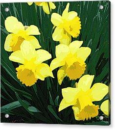 Daffodil Song Acrylic Print by Pamela Hyde Wilson