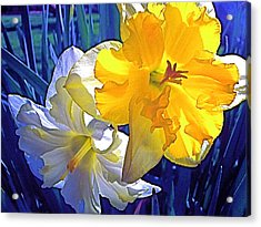 Acrylic Print featuring the photograph Daffodils 1 by Pamela Cooper