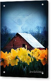 Daffodils And A Red Barn Acrylic Print