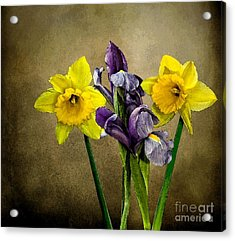 Daffodils And Iris Acrylic Print by Shirley Mangini