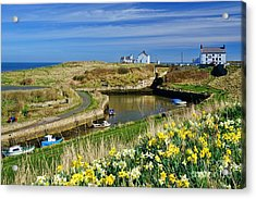 Acrylic Print featuring the photograph Seaton Sluice Harbour Daffodils by Les Bell