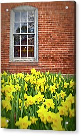 Daffodils In Portsmouth, New Hampshire Acrylic Print by Jerry and Marcy Monkman