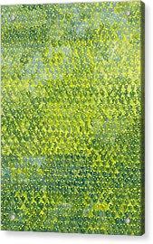 Daffodils Acrylic Print by Leigh Glover