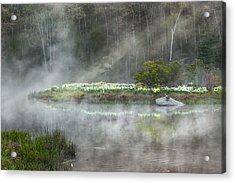 Daffodils Of The Fog Acrylic Print by Bill Wakeley