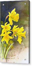 Daffodils Acrylic Print by Rick Huotari