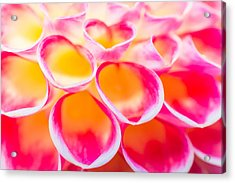 Dahlia Abstract Acrylic Print by Priya Ghose