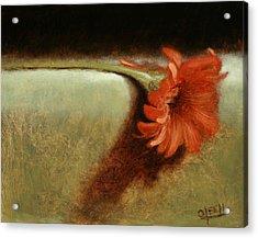 Dahlia Flower Acrylic Print by Christy Olsen