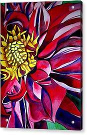 Dahlia In Macro Style Acrylic Print by Sacha Grossel