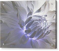 Dahlia Inner Beauty Acrylic Print