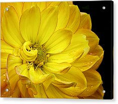 Acrylic Print featuring the photograph Dahlia Pedals by Gary Neiss