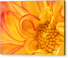 Dahlia Swirls Acrylic Print