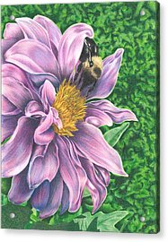Acrylic Print featuring the drawing Dahlia by Troy Levesque
