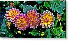 Dahlia Watercolor Acrylic Print by Jeff McJunkin